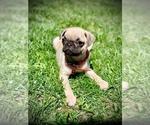Small #7 Pug