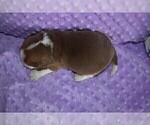 Small #1 Beagle