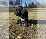 Small #12 Portuguese Water Dog