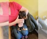 Small #5 Beagle