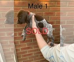 Small #25 German Shorthaired Pointer