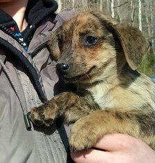 Mutt Dog For Adoption in LIBERTY, KY, USA