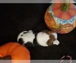 Small #28 Basset Hound