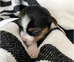 Small #35 Yorkshire Terrier