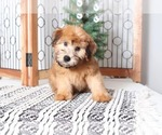 Small #1 Soft Coated Wheaten Terrier