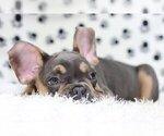 Small #3 French Bulldog