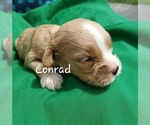 Image preview for Ad Listing. Nickname: Conrad