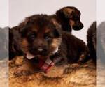 Small #15 German Shepherd Dog