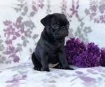 Small #10 Pug
