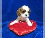 Small #4 Cavalier King Charles Spaniel