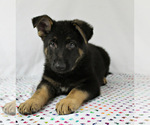 Small #7 German Shepherd Dog