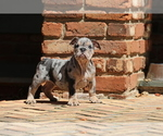 Small #14 Bulldog