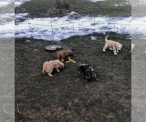 Cavapoo Puppy for sale in SALT LAKE CITY, UT, USA