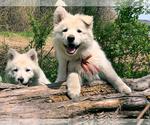 Small #29 German Shepherd Dog