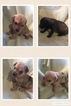 Mutt Dog For Adoption in COLUMBIA, LA, USA