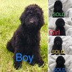 1 Male and 1 Female Available