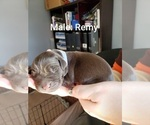 Image preview for Ad Listing. Nickname: Remy