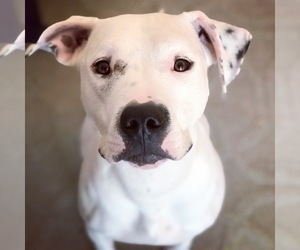 Mutt Dogs for adoption in ADRIAN, MI, USA