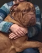 Dogue de Bordeaux Puppy For Sale in MONROE, NC, USA