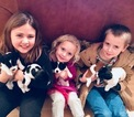 Jack Russell Terrier Puppy For Sale in KILL DEVIL HILLS, NC,