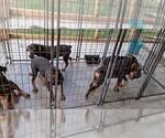 Small #70 Rottweiler
