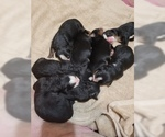 5 males and 3 females for sale