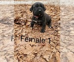Image preview for Ad Listing. Nickname: Female 1