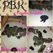 PR UKC registered females