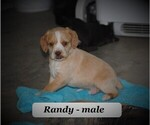 Image preview for Ad Listing. Nickname: Randy