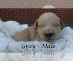 Image preview for Ad Listing. Nickname: Gray Collar