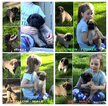 Mastiff Puppy For Sale in INDIANAPOLIS, IN, USA