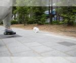 Small Photo #2 Pomeranian Puppy For Sale in ASTORIA, NY, USA