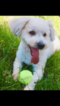 Cantel Puppy For Sale in EDGEWATER, NJ, USA
