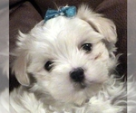 Image preview for Ad Listing. Nickname: Bailey