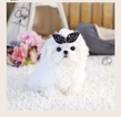 Maltese Puppy For Sale in GLENDALE, CA, USA