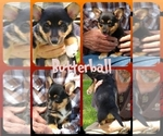Image preview for Ad Listing. Nickname: Butterball