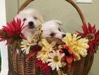 2 Wonderful Puppies