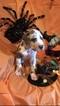 Great Dane Puppy For Sale in ALBERTVILLE, Alabama,
