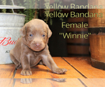 Image preview for Ad Listing. Nickname: Winnie