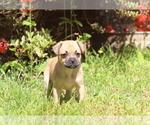 Puppy 5 Puggat