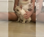 Small Photo #18 French Bulldog Puppy For Sale in LEAWOOD, KS, USA