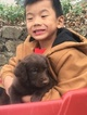 Labradoodle Puppy For Sale in BRADLEYVILLE, MO