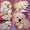 English Bulldogge Puppy For Sale in SAN ANTONIO, TX, USA