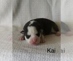 Image preview for Ad Listing. Nickname: Kai