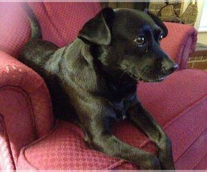 Chug Dog for Adoption in MACON, Georgia USA