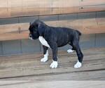 Small #14 Boxer