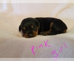 Image preview for Ad Listing. Nickname: Rottweiler pups