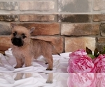 Small #3 Cairn Terrier