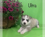 Image preview for Ad Listing. Nickname: Ultra