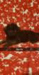 Puppy 6 German Shepherd Dog-Goldendoodle Mix